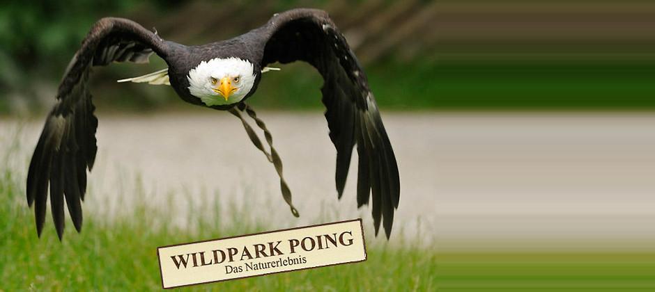 Gutschein für Die Erwachsenen-Jahreskarte zum halben Preis! von Wildpark Poing