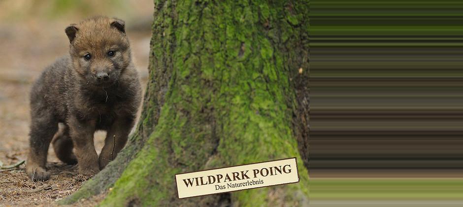 Gutschein für Die Kinder-Jahreskarte zum halben Preis! von Wildpark Poing